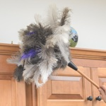 FlyLady's Premium Feather Duster